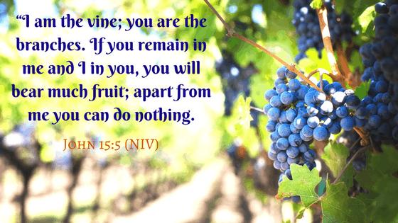 John 15:5 Jesus is the vine