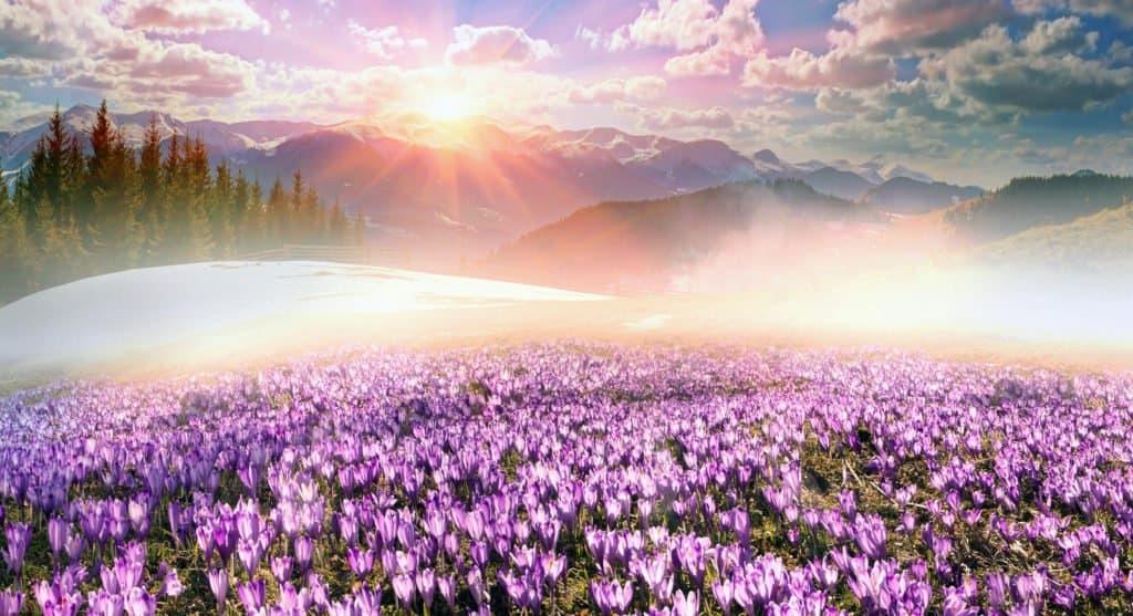 God's gorgeous Creation